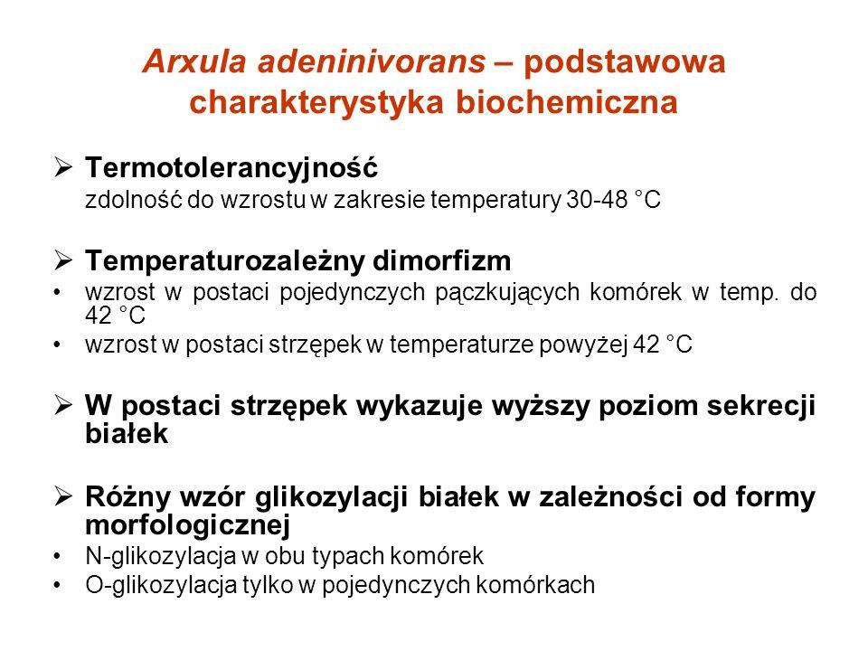 Etanol jako składnik biopaliw Biopaliwa - benzyny silnikowe zawierające powyżej 5,0% objętościowo biokomponentów lub powyżej 15,0% objętościowo eterów bioetanolu eteru etylo-tert-butylowego Wykorzystanie biopaliw w Polsce w 2010 r.