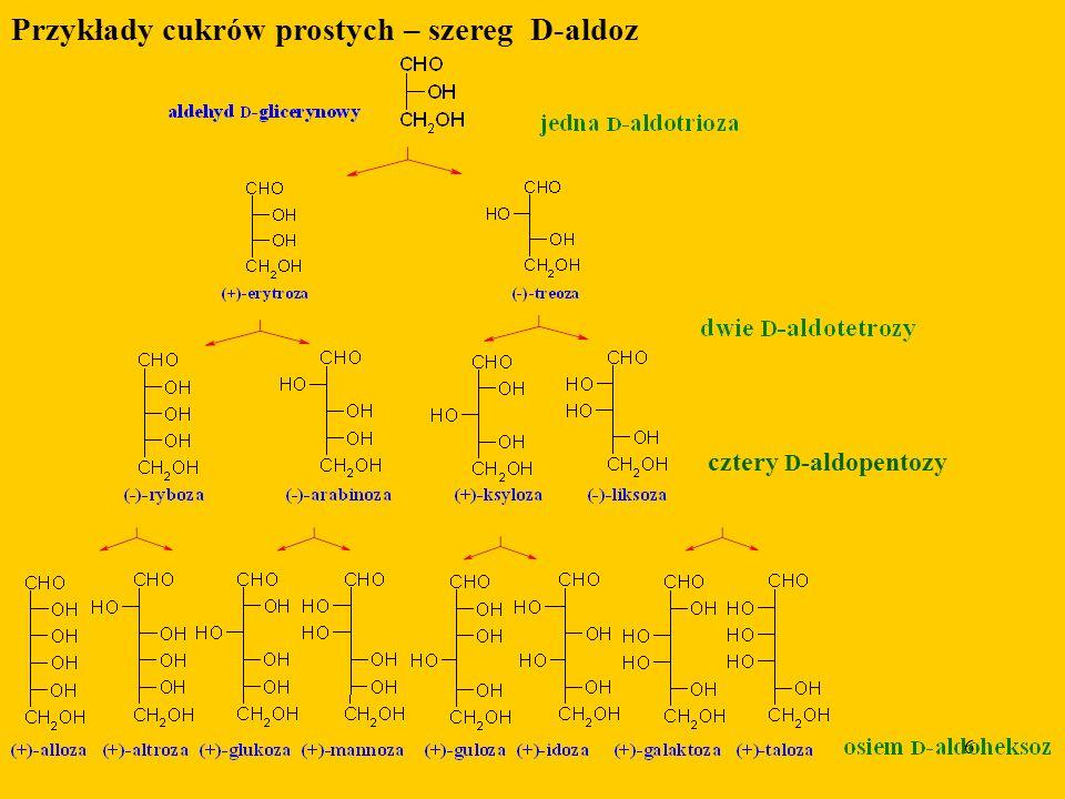6 Przykłady cukrów prostych – szereg D-aldoz cztery D -aldopentozy