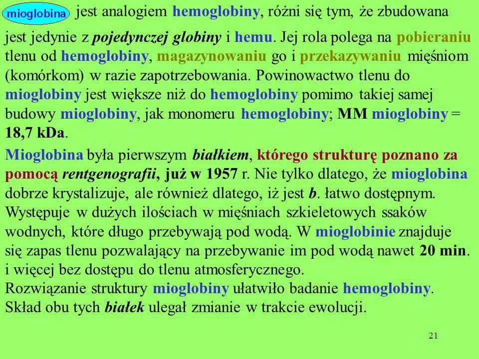 21 jest jedynie z pojedynczej globiny i hemu. Jej rola polega na pobieraniu tlenu od hemoglobiny, magazynowaniu go i przekazywaniu mięśniom (komórkom)