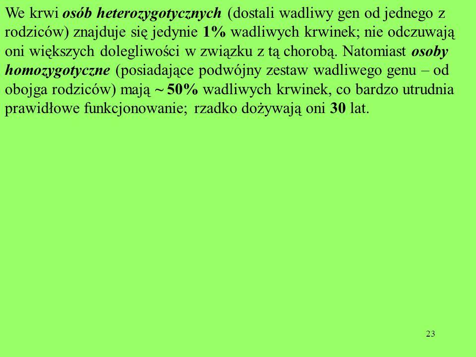 23 We krwi osób heterozygotycznych (dostali wadliwy gen od jednego z rodziców) znajduje się jedynie 1% wadliwych krwinek; nie odczuwają oni większych