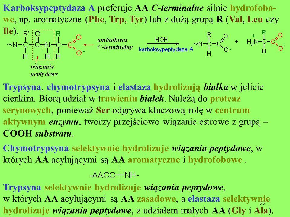 33 Karboksypeptydaza A preferuje AA C-terminalne silnie hydrofobo- we, np. aromatyczne (Phe, Trp, Tyr) lub z dużą grupą R (Val, Leu czy Ile). Trypsyna