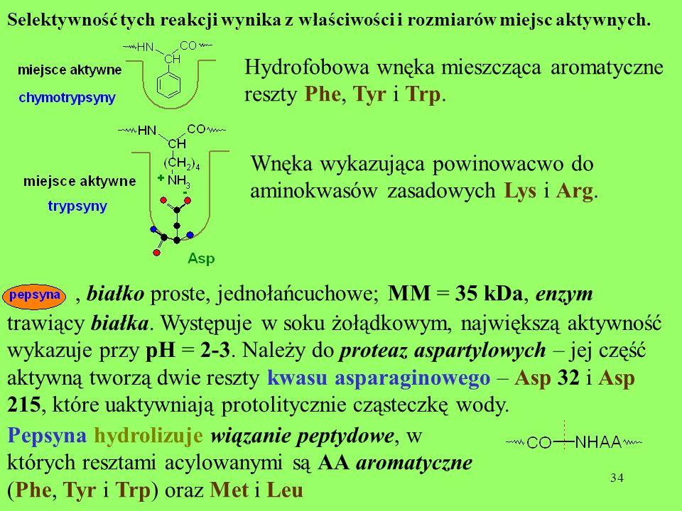 34 Selektywność tych reakcji wynika z właściwości i rozmiarów miejsc aktywnych. Hydrofobowa wnęka mieszcząca aromatyczne reszty Phe, Tyr i Trp. Wnęka
