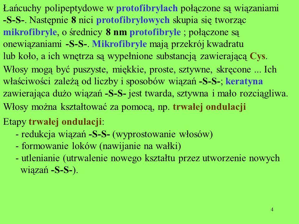 25 W glikoproteinach grupami prostetycznymi są cukry – oligocukry, a nawet policukry.