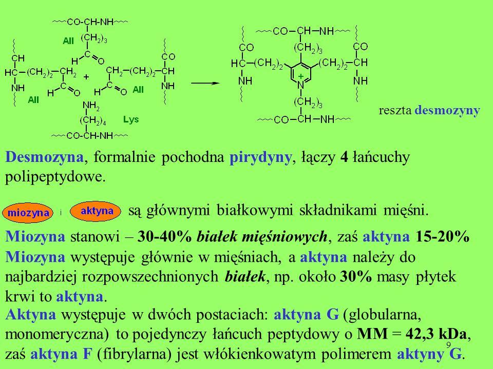 9 reszta desmozyny Desmozyna, formalnie pochodna pirydyny, łączy 4 łańcuchy polipeptydowe. są głównymi białkowymi składnikami mięśni. Miozyna stanowi