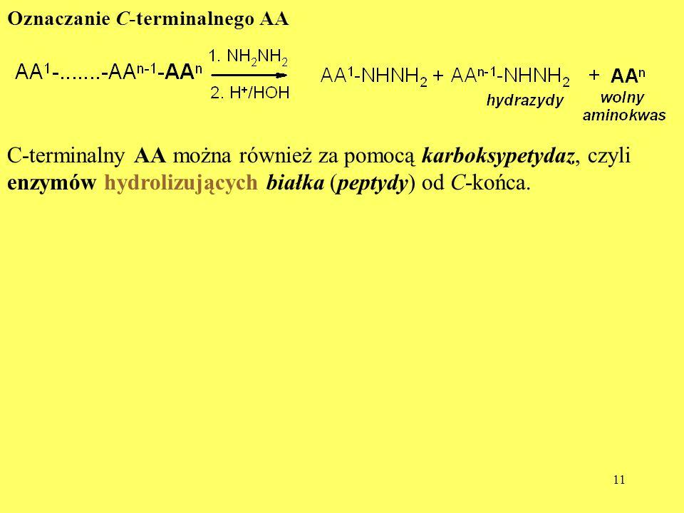 11 Oznaczanie C-terminalnego AA C-terminalny AA można również za pomocą karboksypetydaz, czyli enzymów hydrolizujących białka (peptydy) od C-końca.