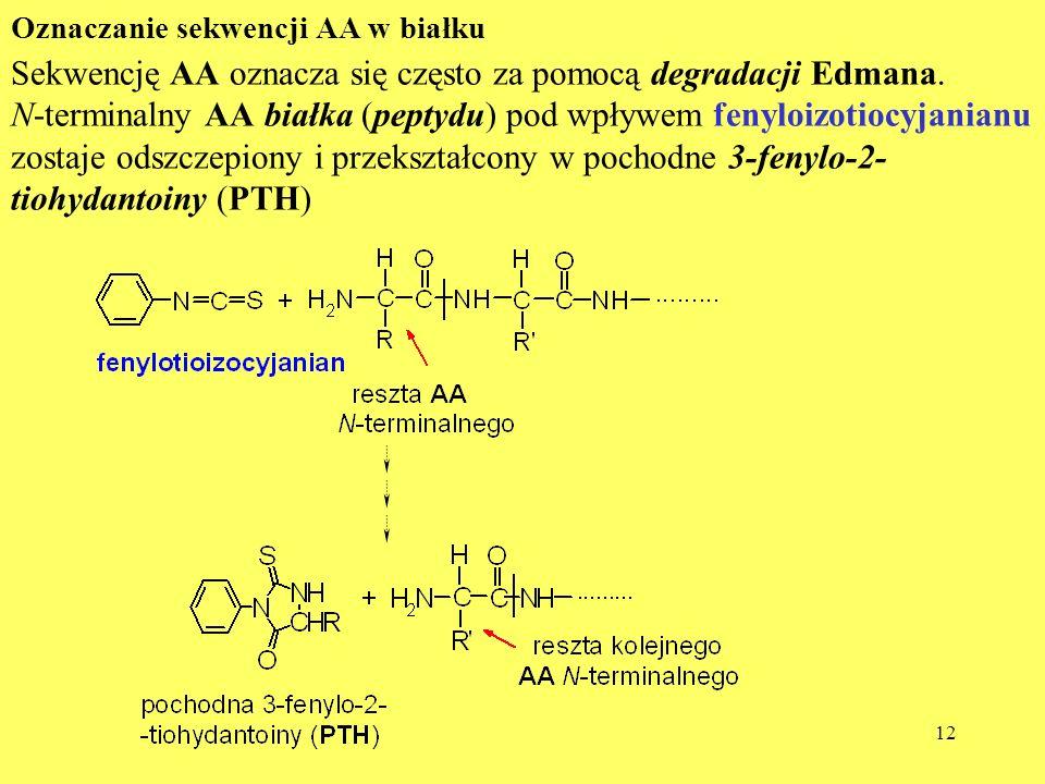 12 Oznaczanie sekwencji AA w białku Sekwencję AA oznacza się często za pomocą degradacji Edmana. N-terminalny AA białka (peptydu) pod wpływem fenyloiz