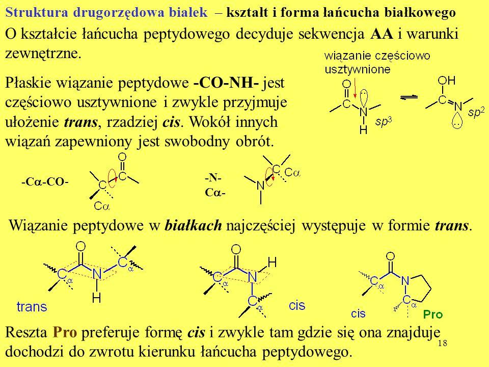 18 Struktura drugorzędowa białek – kształt i forma łańcucha białkowego O kształcie łańcucha peptydowego decyduje sekwencja AA i warunki zewnętrzne. Pł