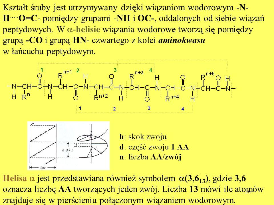20 Kształt śruby jest utrzymywany dzięki wiązaniom wodorowym -N- H..... O=C- pomiędzy grupami -NH i OC-, oddalonych od siebie wiązań peptydowych. W -h