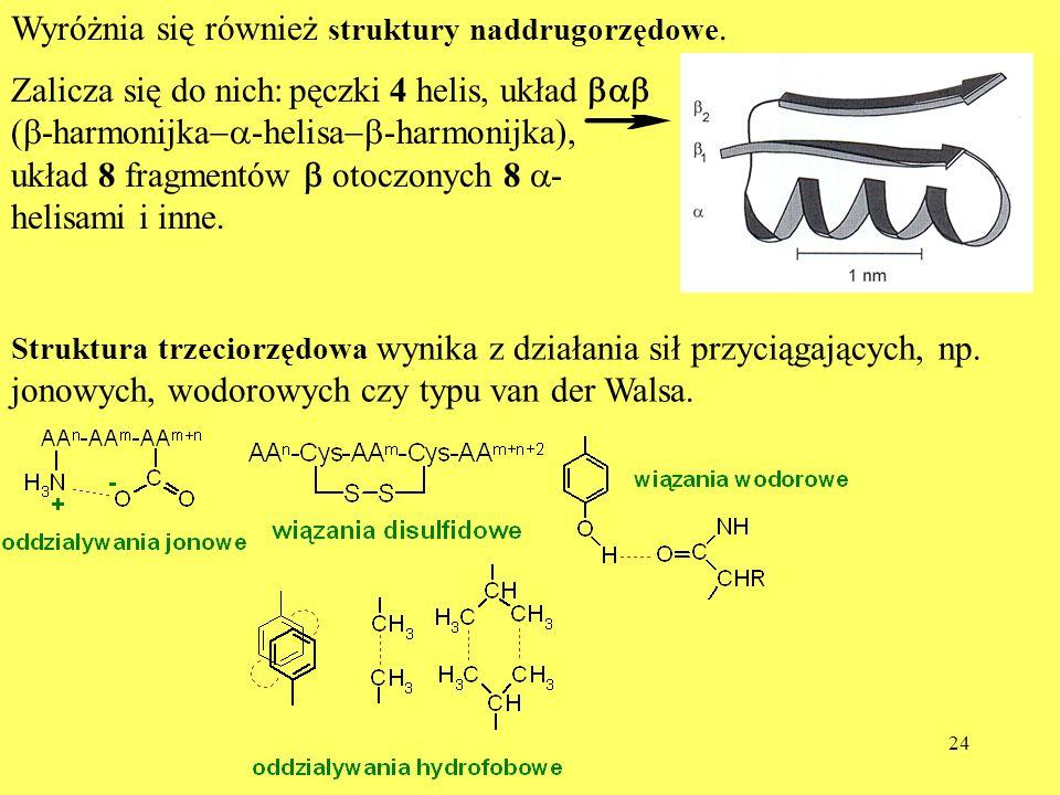 24 Wyróżnia się również struktury naddrugorzędowe. Zalicza się do nich: pęczki 4 helis, układ ( -harmonijka -helisa -harmonijka), układ 8 fragmentów o