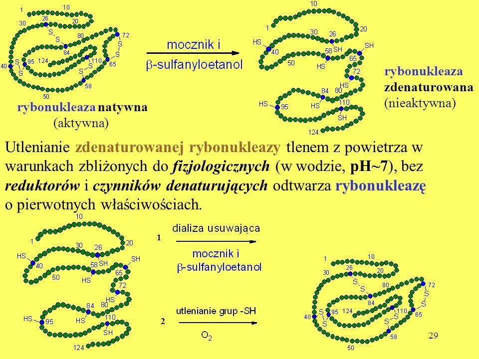 29 Utlenianie zdenaturowanej rybonukleazy tlenem z powietrza w warunkach zbliżonych do fizjologicznych (w wodzie, pH~7), bez reduktorów i czynników de