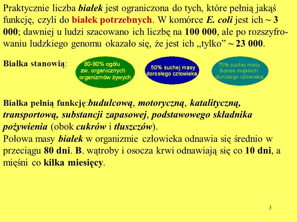 14 Enzymy specyficznie hydrolizujące wiązania peptydowe EnzymAA, którego wiązanie jest hydrolizowane Miejsce hydrolizy Trypsyna (T)Lys, Arg (AA zasadowe)AA - NHCH - Chymotrypsyna (CT)Tyr, Phe, Trp (aromatyczne)AA - NHCH - Pepsyna (P)Tyr, Phe, Trp (aromatyczne) - CO - NHAA Termolizyna (TL)Ile, Leu, Val (duże alifatyczne) - CO - NHAA KlostrypainaArgArg- NHCH - Proteaza ze Staphylococ.AspAsp - NHCH -