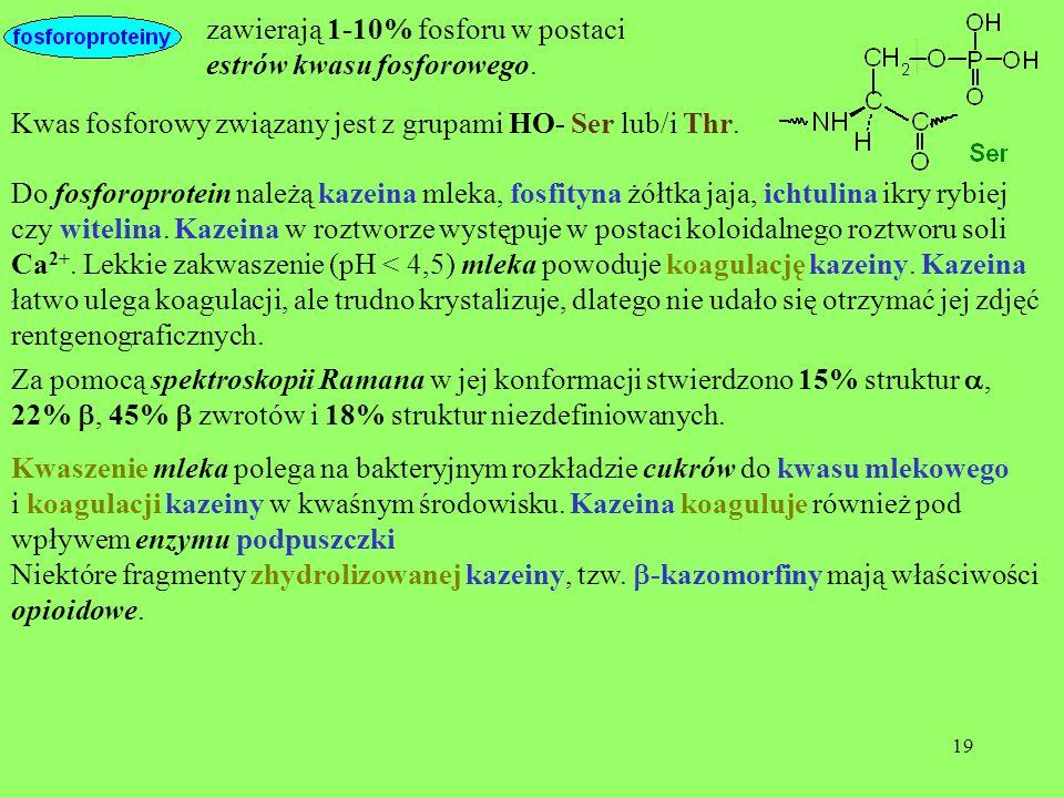 19 zawierają 1-10% fosforu w postaci estrów kwasu fosforowego. Do fosforoprotein należą kazeina mleka, fosfityna żółtka jaja, ichtulina ikry rybiej cz