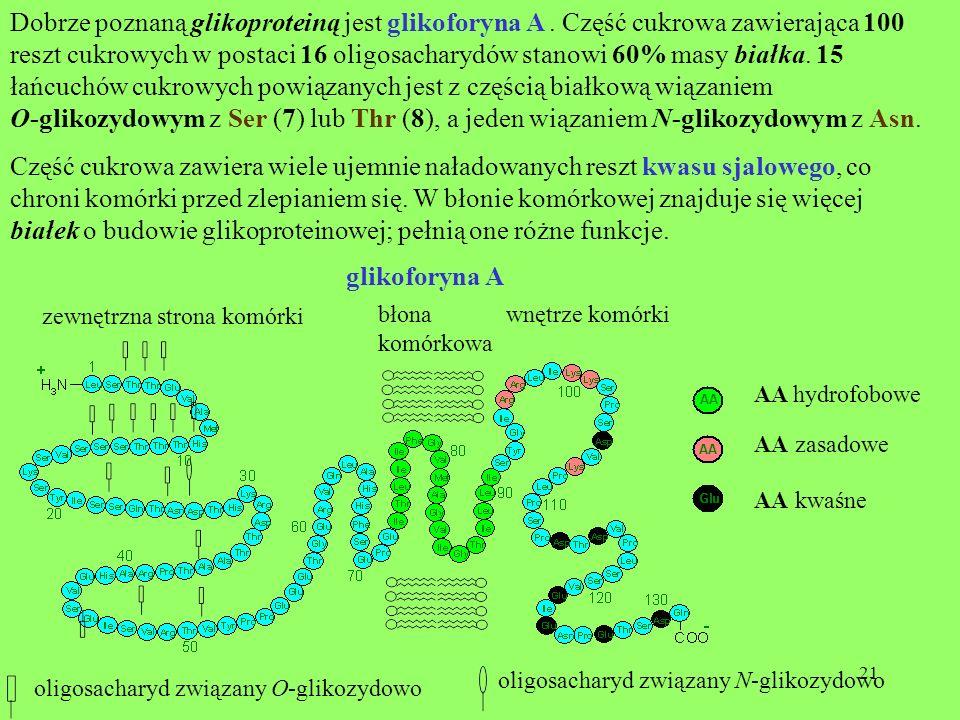 21 zewnętrzna strona komórki wnętrze komórkibłona komórkowa oligosacharyd związany O-glikozydowo oligosacharyd związany N-glikozydowo AA hydrofobowe A