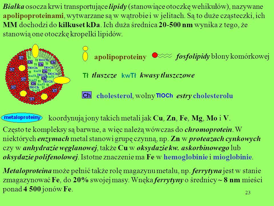 23 Białka osocza krwi transportujące lipidy (stanowiące otoczkę wehikułów), nazywane apolipoproteinami, wytwarzane są w wątrobie i w jelitach. Są to d