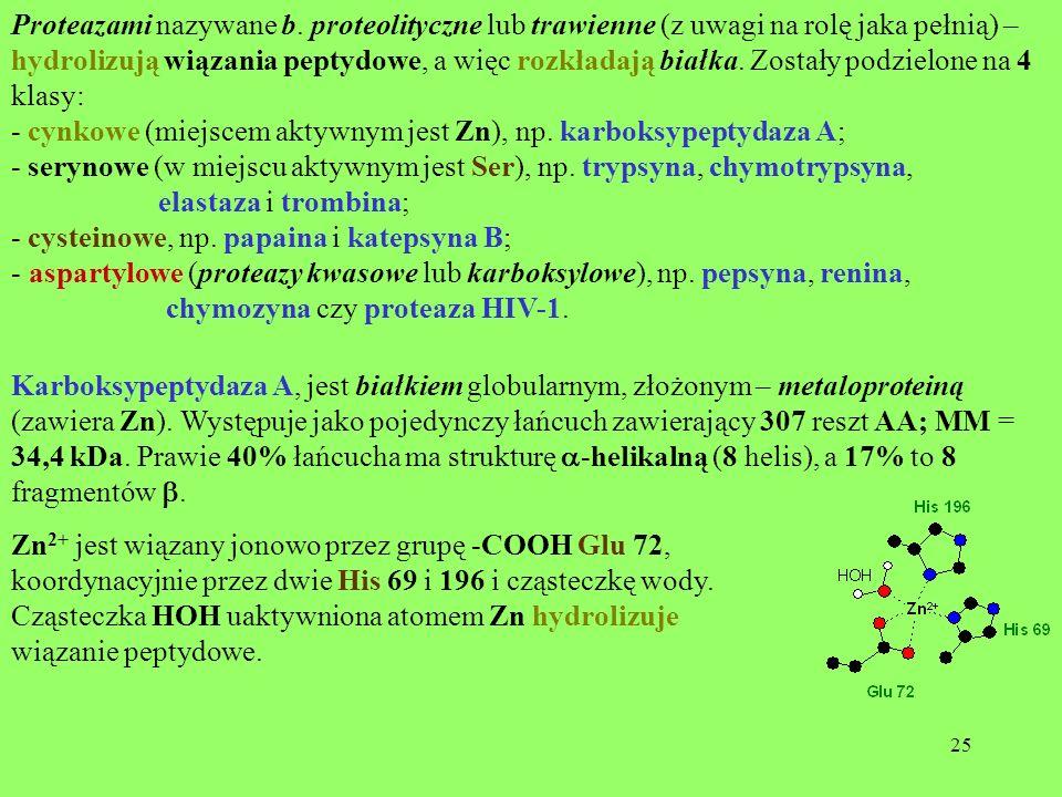 25 Proteazami nazywane b. proteolityczne lub trawienne (z uwagi na rolę jaka pełnią) – hydrolizują wiązania peptydowe, a więc rozkładają białka. Zosta