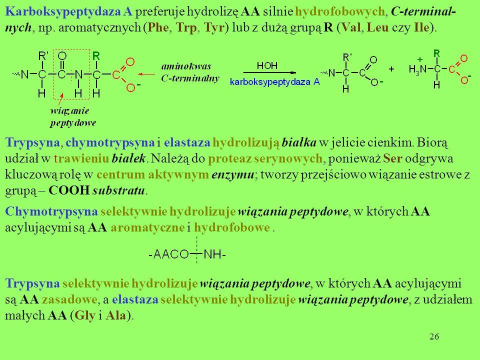 26 Karboksypeptydaza A preferuje hydrolizę AA silnie hydrofobowych, C-terminal- nych, np. aromatycznych (Phe, Trp, Tyr) lub z dużą grupą R (Val, Leu c