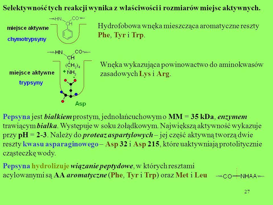 27 Selektywność tych reakcji wynika z właściwości i rozmiarów miejsc aktywnych. Hydrofobowa wnęka mieszcząca aromatyczne reszty Phe, Tyr i Trp. Wnęka