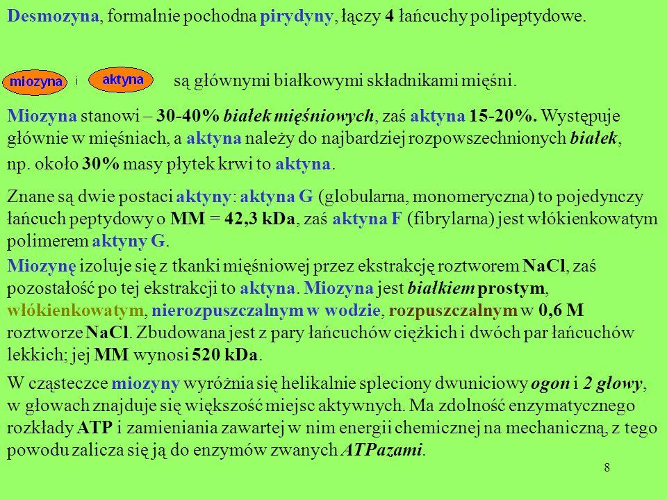 8 Desmozyna, formalnie pochodna pirydyny, łączy 4 łańcuchy polipeptydowe. są głównymi białkowymi składnikami mięśni. Miozyna stanowi – 30-40% białek m