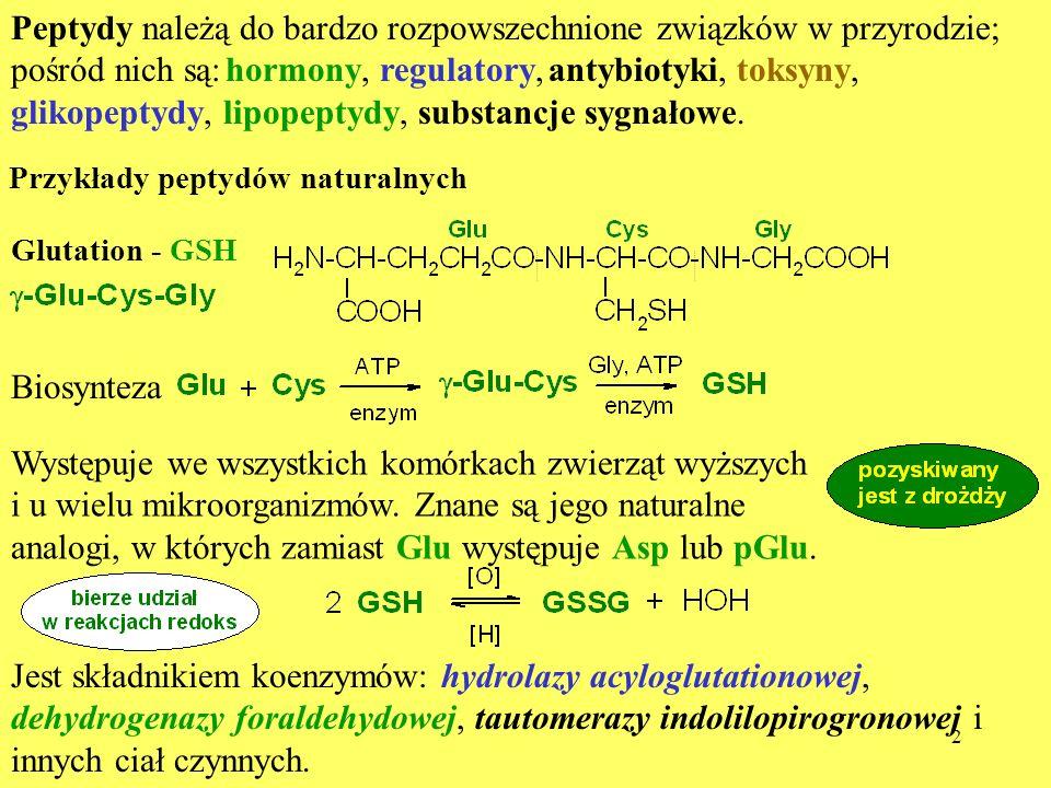 13 Zbliżona budowa OT i VP są odpowiedzialne za resztkową hormonalną aktywność obu peptydów Peptyd Aktywność [jednostki międzynarodowe IU] oksytotycznalaktacyjnaantydiu- retyczna presyjna OT 520 4754 4 AVP 14 70 323 369 [Thr 4 ]OT 923 543 0,9 0,5 [Phe 2,Orn 8 ]OT ~1 7 0,6 124 dVDAVP ~8 - 1230 antagonista dDAVP - 3 1200 0,4