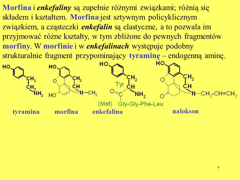 8 Endorfiny – endogenne morfiny Znane są,, i endorfiny; różnią się one długością łańcucha peptydowego (około 30 AA) i nieznacznie składem AA.