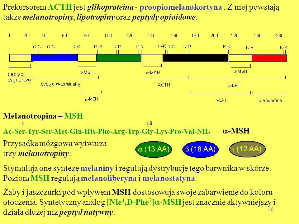 10 Prekursorem ACTH jest glikoproteina - proopiomelanokortyna. Z niej powstają także melanotropiny, lipotropiny oraz peptydy opioidowe. Melanotropina