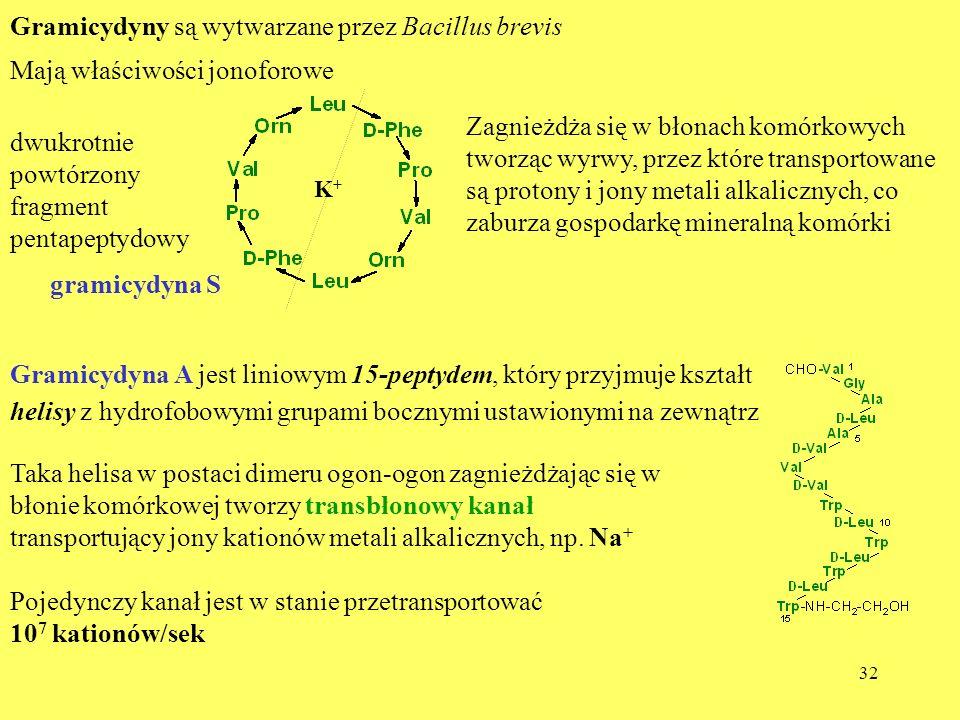 32 Gramicydyny są wytwarzane przez Bacillus brevis Mają właściwości jonoforowe gramicydyna S dwukrotnie powtórzony fragment pentapeptydowy Zagnieżdża