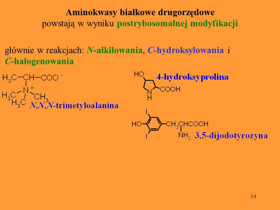 14 Aminokwasy białkowe drugorzędowe powstają w wyniku postrybosomalnej modyfikacji głównie w reakcjach: N-alkilowania, C-hydroksylowania i C-halogenow