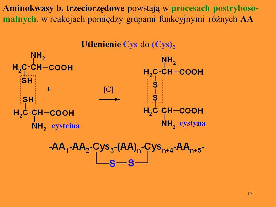 15 Aminokwasy b. trzeciorzędowe powstają w procesach postryboso- malnych, w reakcjach pomiędzy grupami funkcyjnymi różnych AA Utlenienie Cys do (Cys)