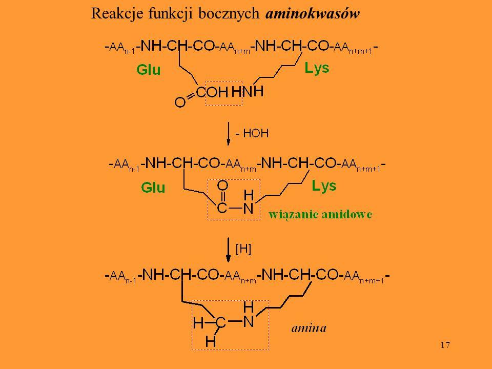 17 Reakcje funkcji bocznych aminokwasów