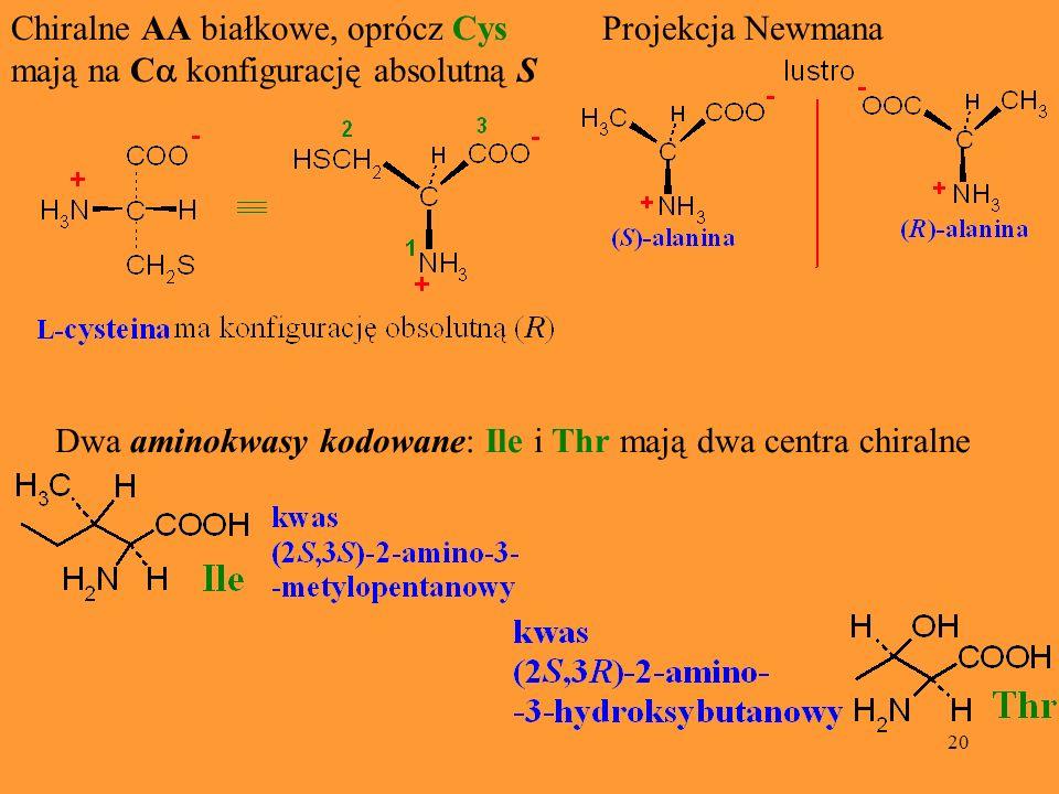 20 Chiralne AA białkowe, oprócz Cys mają na C konfigurację absolutną S Projekcja Newmana Dwa aminokwasy kodowane: Ile i Thr mają dwa centra chiralne