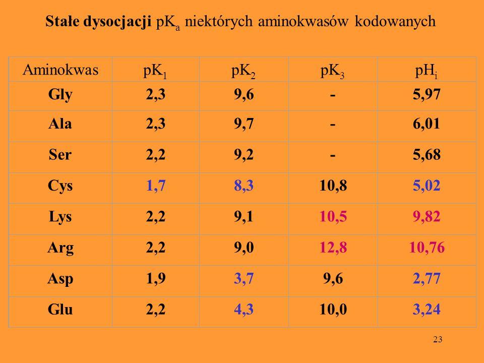23 Stałe dysocjacji pK a niektórych aminokwasów kodowanych Stałe dysocjacji pK a niektórych aminokwasów kodowanych AminokwaspK 1 pK 2 pK 3 pH i Gly 2,