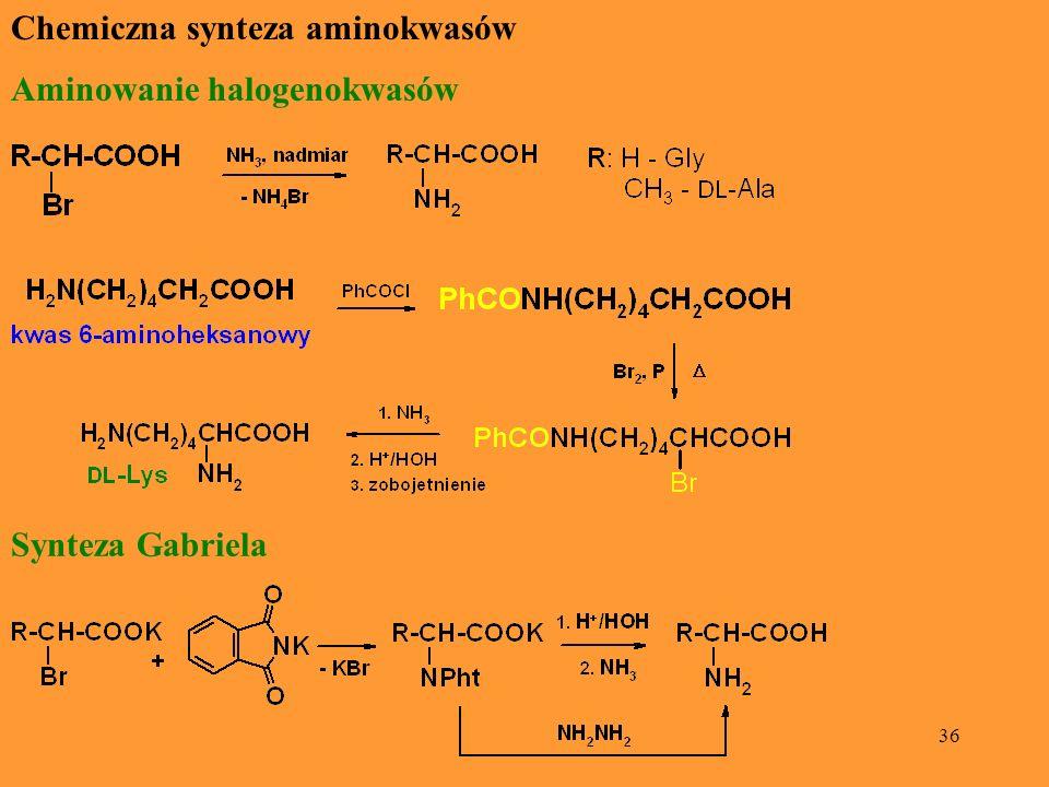 36 Chemiczna synteza aminokwasów Aminowanie halogenokwasów Synteza Gabriela