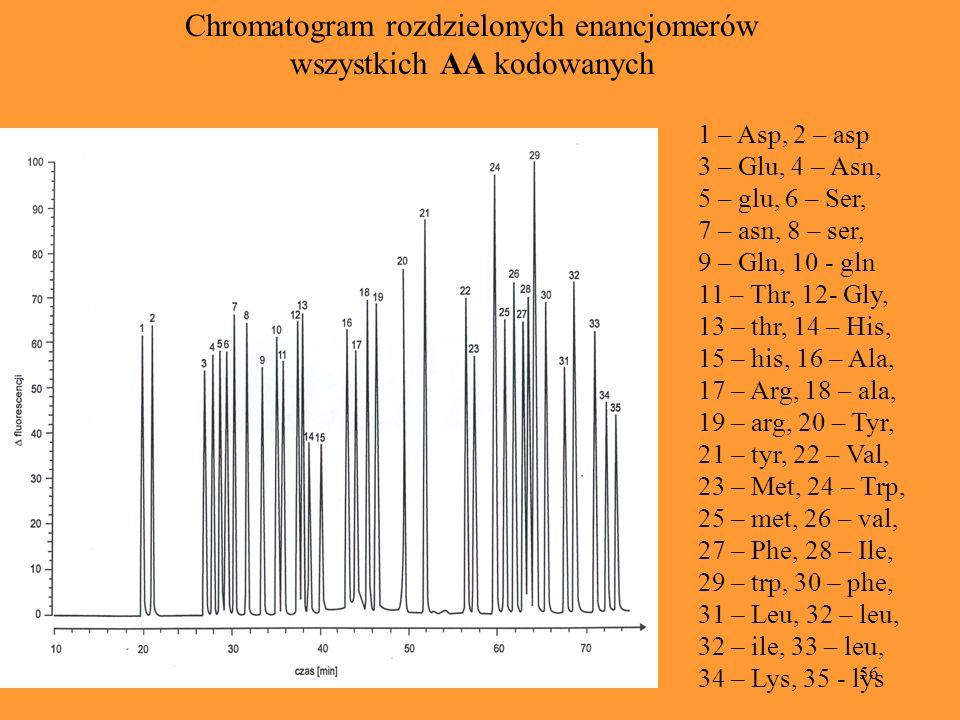56 Chromatogram rozdzielonych enancjomerów wszystkich AA kodowanych 1 – Asp, 2 – asp 3 – Glu, 4 – Asn, 5 – glu, 6 – Ser, 7 – asn, 8 – ser, 9 – Gln, 10