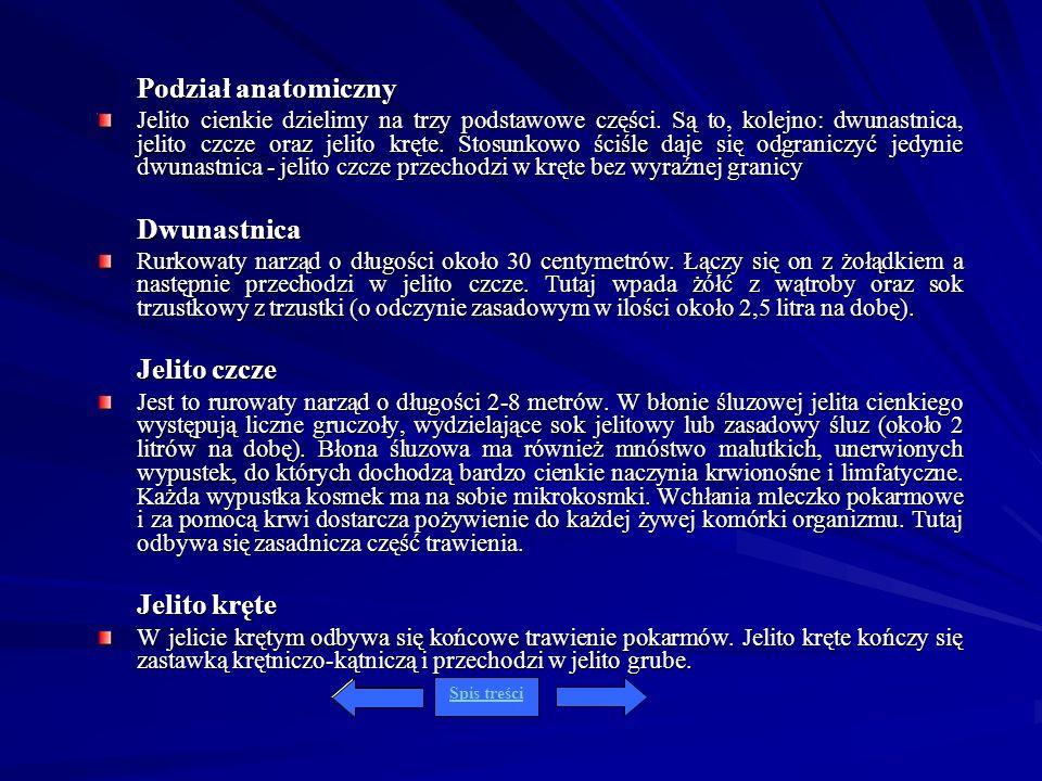 Podział anatomiczny Jelito cienkie dzielimy na trzy podstawowe części. Są to, kolejno: dwunastnica, jelito czcze oraz jelito kręte. Stosunkowo ściśle