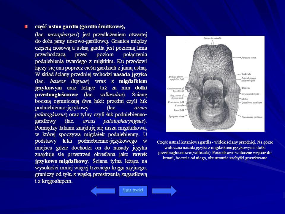 część ustna gardła (gardło środkowe), (łac. mesopharynx) jest przedłużeniem otwartej do dołu jamy nosowo-gardłowej. Granica między częścią nosową a us