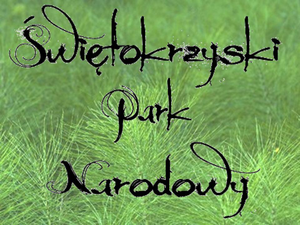 Świętokrzyski Park Narodowy został utworzony 1.05.1950 r.