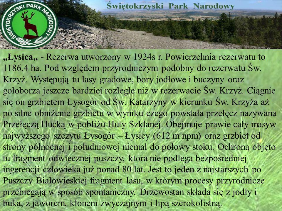 Łysica - Rezerwa utworzony w 1924s r. Powierzchnia rezerwatu to 1186,4 ha. Pod względem przyrodniczym podobny do rezerwatu Św. Krzyż. Występują tu las