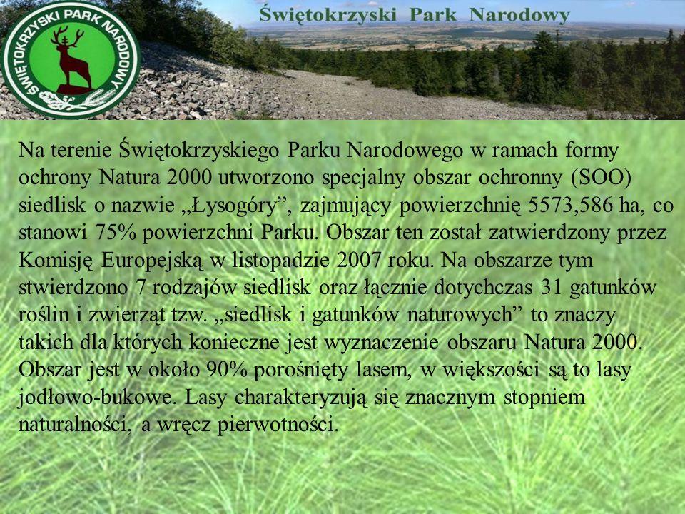 Na terenie Świętokrzyskiego Parku Narodowego w ramach formy ochrony Natura 2000 utworzono specjalny obszar ochronny (SOO) siedlisk o nazwie Łysogóry,