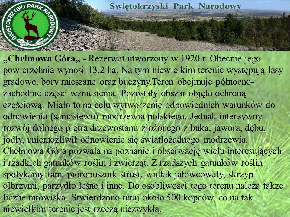 Chełmowa Góra - Rezerwat utworzony w 1920 r. Obecnie jego powierzchnia wynosi 13,2 ha. Na tym niewielkim terenie występują lasy grądowe, bory mieszane