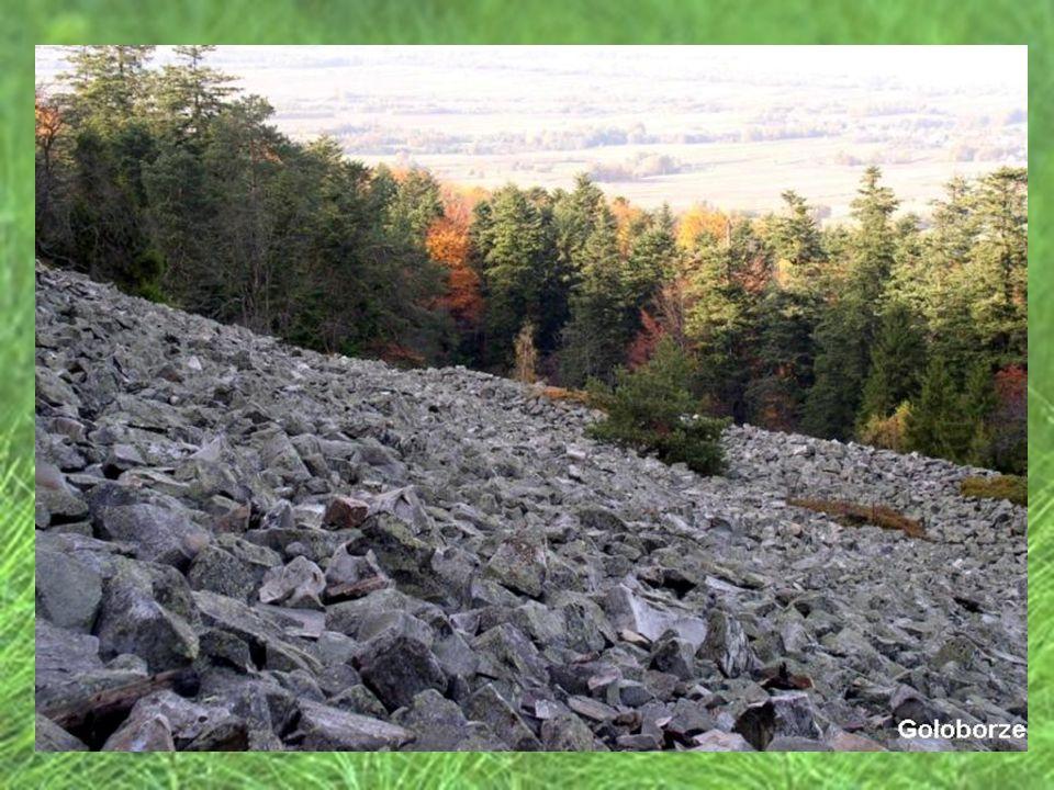 Czarny Las - Rezerwat utworzony w 1954 r.Obszar wynosi 26,5 ha.