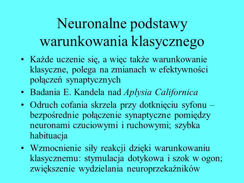 Neuronalne podstawy warunkowania klasycznego Każde uczenie się, a więc także warunkowanie klasyczne, polega na zmianach w efektywności połączeń synaptycznych Badania E.