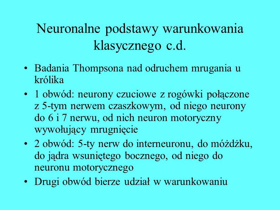 Neuronalne podstawy warunkowania klasycznego c.d.