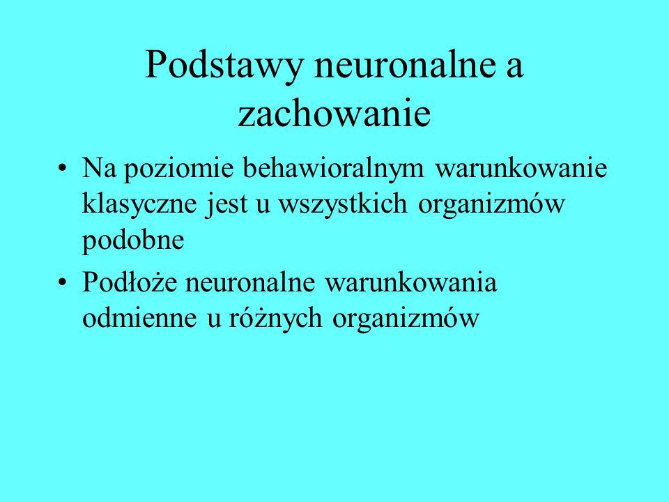 Podstawy neuronalne a zachowanie Na poziomie behawioralnym warunkowanie klasyczne jest u wszystkich organizmów podobne Podłoże neuronalne warunkowania odmienne u różnych organizmów