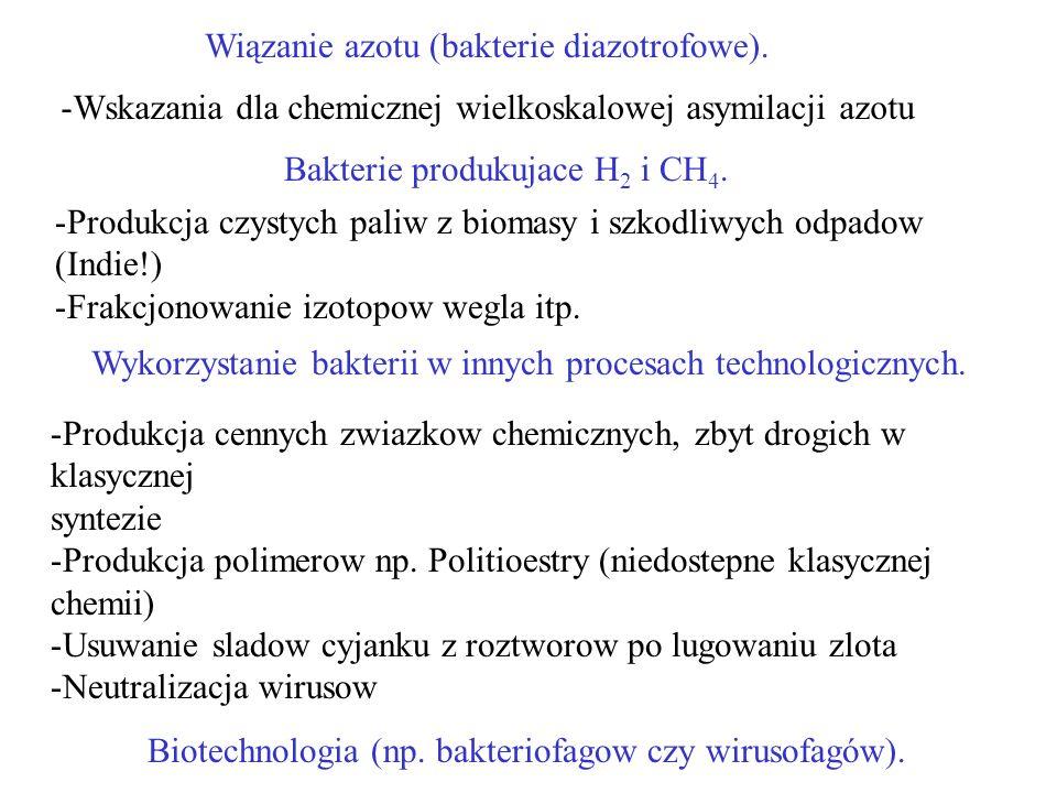 Wiązanie azotu (bakterie diazotrofowe).Wykorzystanie bakterii w innych procesach technologicznych.