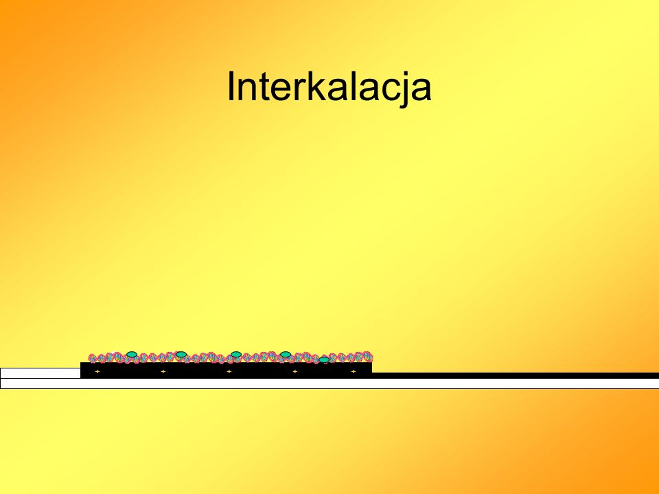 Interkalacja ++++ +