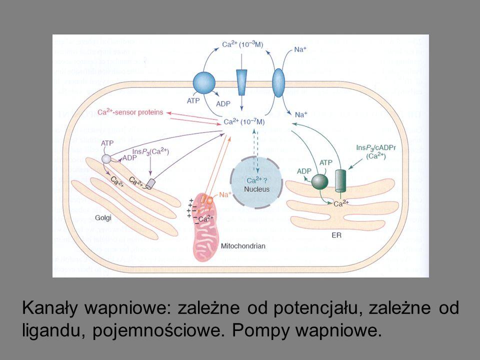 Kanały wapniowe: zależne od potencjału, zależne od ligandu, pojemnościowe. Pompy wapniowe.