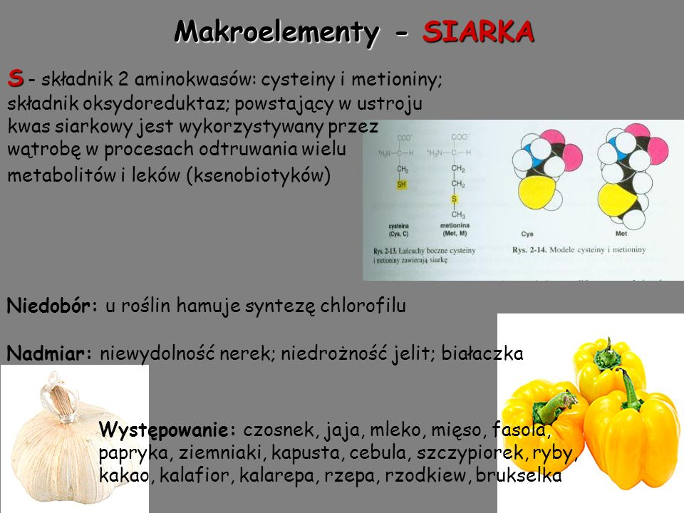 Makroelementy - SIARKA S S - składnik 2 aminokwasów: cysteiny i metioniny; składnik oksydoreduktaz; powstający w ustroju kwas siarkowy jest wykorzystywany przez wątrobę w procesach odtruwania wielu metabolitów i leków (ksenobiotyków) Występowanie: czosnek, jaja, mleko, mięso, fasola, papryka, ziemniaki, kapusta, cebula, szczypiorek, ryby, kakao, kalafior, kalarepa, rzepa, rzodkiew, brukselka Nadmiar: niewydolność nerek; niedrożność jelit; białaczka Niedobór: u roślin hamuje syntezę chlorofilu