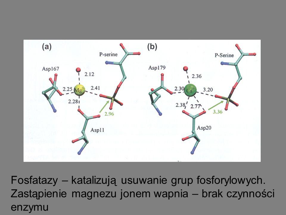 Fosfatazy – katalizują usuwanie grup fosforylowych. Zastąpienie magnezu jonem wapnia – brak czynności enzymu