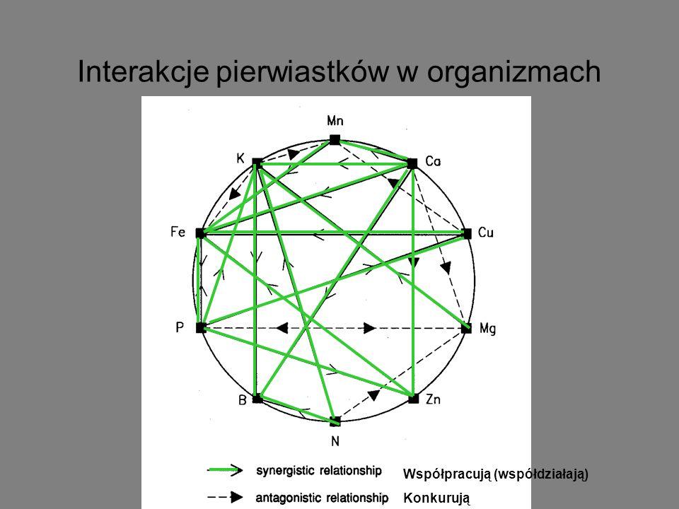Interakcje pierwiastków w organizmach Współpracują (współdziałają) Konkurują