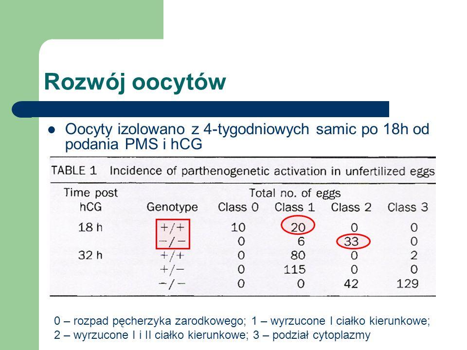 Rozwój oocytów Oocyty izolowano z 4-tygodniowych samic po 18h od podania PMS i hCG 0 – rozpad pęcherzyka zarodkowego; 1 – wyrzucone I ciałko kierunkowe; 2 – wyrzucone I i II ciałko kierunkowe; 3 – podział cytoplazmy